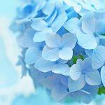 梅雨でも出かけたくなる!素敵な紫陽花が見られるスポットをご紹介♪